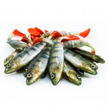 Angry Lures Angry Perch Jointed 13,5cm